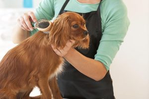pet grooming - Honeycomb Builders Inc